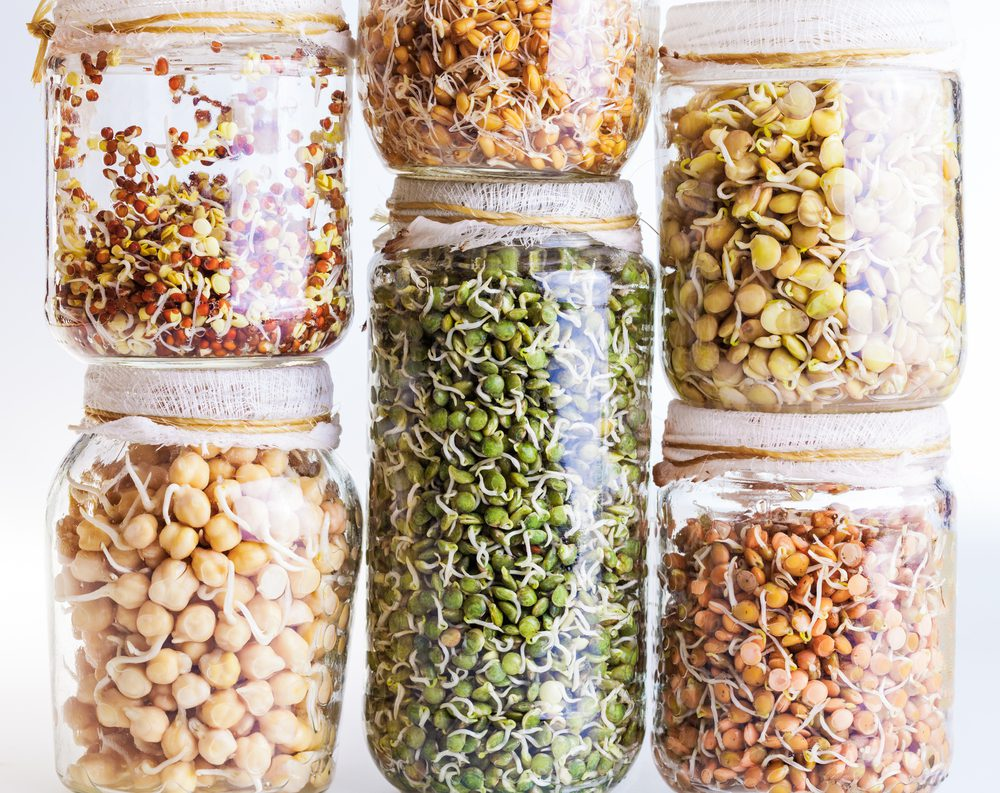 Grow Nutrient-Dense Sprouts for a Winter Boost